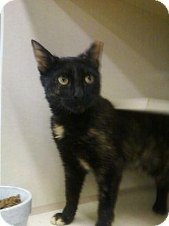 Adopt a Pet :: Photo 1: Harriet - Riverhead, NY -  Domestic ShorthairMix
