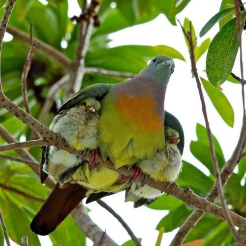 Motherly love.