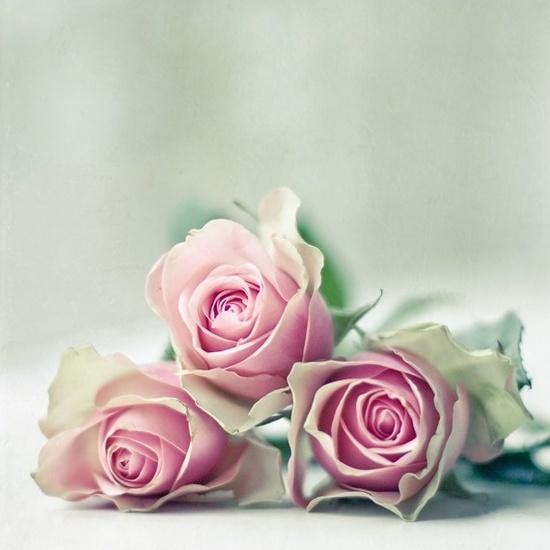 { roses }