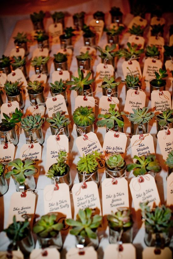 succulent favors for place cards