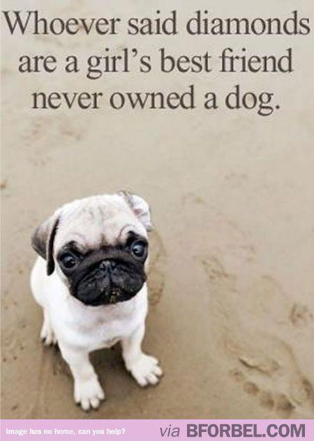 Not only a man's best friend…