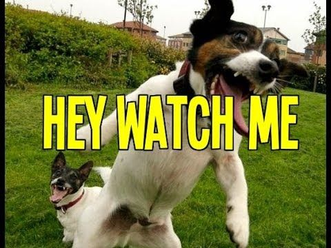 Funny Animals Video in 30 Minutes