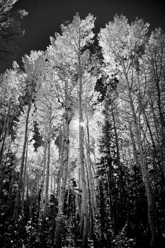 B Aspen trees - I bought this print and LOVE it!!  It's going in my dining room once I get it matted. ?