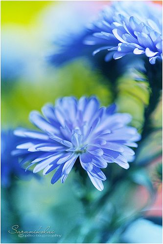 Lovely blue flowers
