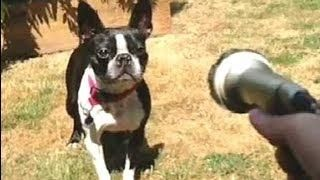 Compilation Of #Funny And #Cute #Pets #Vines