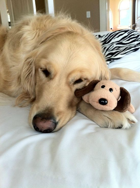 he won't sleep without his stuffie