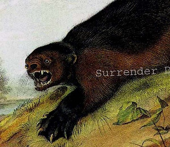 Wolverine, John J Audubon Naturalist Wild Animal Lithograph Print Vintage Natural History