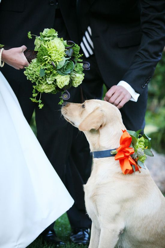 My dog will be in my wedding!