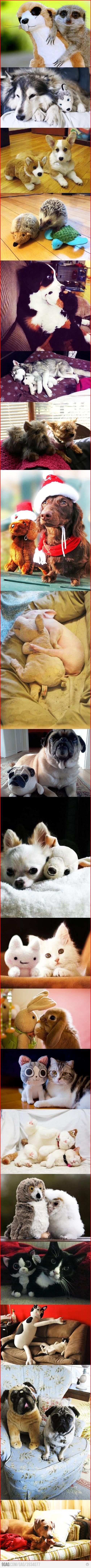Animals & Their Stuffed Animals