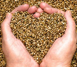 The super food your Not eating    benefits-of-hemp-seeds