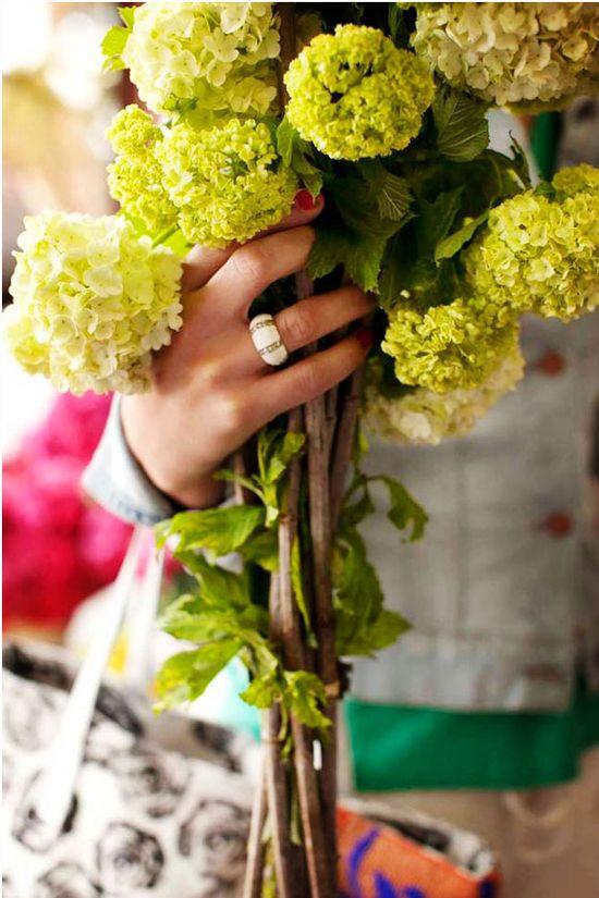 flower market green hydrangea