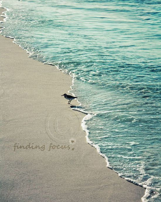 Beach House Photo, Sandpiper Coastal Ocean Bird Cornflower Baby Blue Taupe Gray Sand, Seaside Gift Idea 8x10 Art Photography Nursery Decor. $28.00, via Etsy.