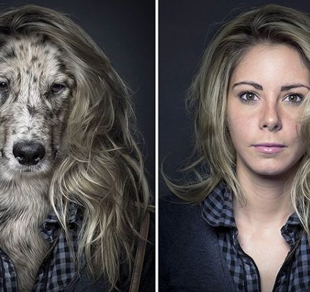 Dogs dress in their owners' clothes, pose for professional portraits [8 pictures]
