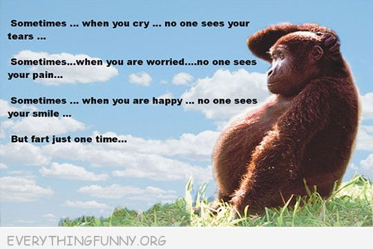 monkey/ sometimes when you are happy no one see it but fart one time