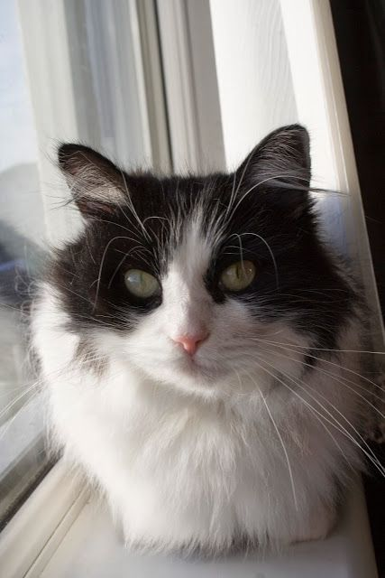 such a cute cat!