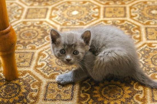 Kala the Kitten #2