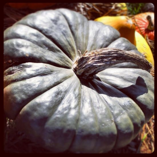 Our perfect pumpkin. Tamara Stephenson interior design
