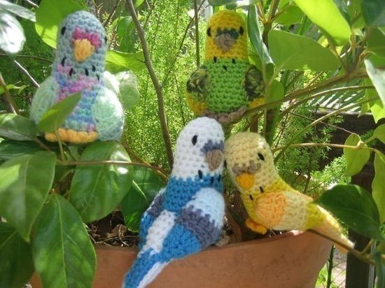 Budgerigars budgie crochet pattern Australian Native by crochetroo, $5.00