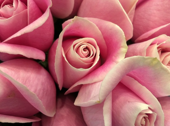 flowers, pink flowers!