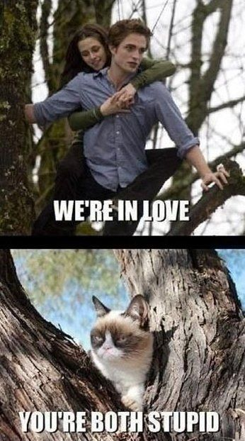 LOL – Grumpy cat vs. Twilight - MEME Funny Pictures