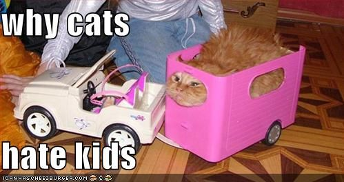 why cats hate kids