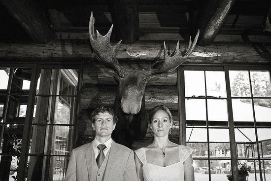 Moose photobomb in wedding photo.