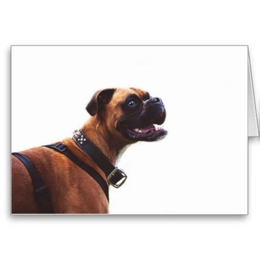 Boxer Love Greeting Card