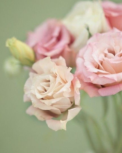 The timelessly romantic hues of spring's return... #roses #pink #garden #spring #flowers