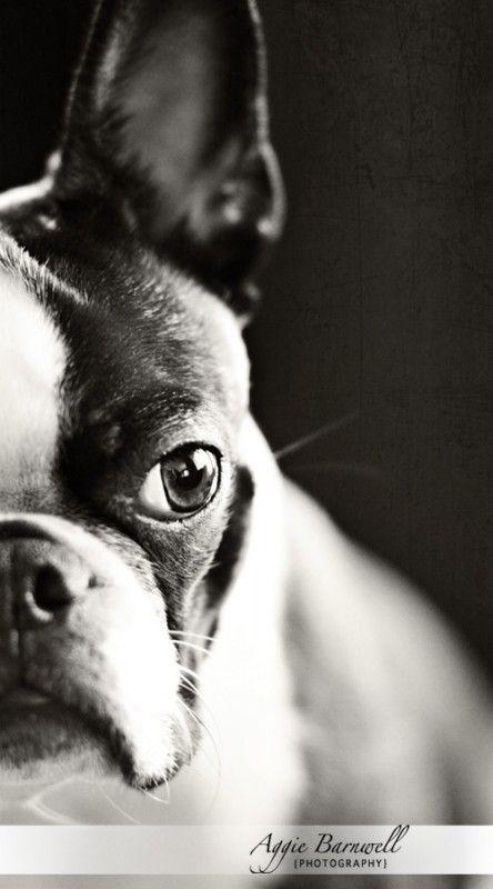 Super sweet pet photos!