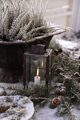 lantern & evergreens sprinkled with snow