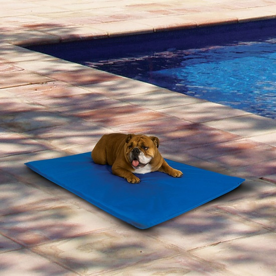 Pet cool bed - this will be great for the summer by the pool!