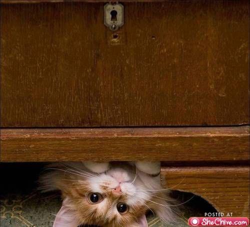 hide n seek.