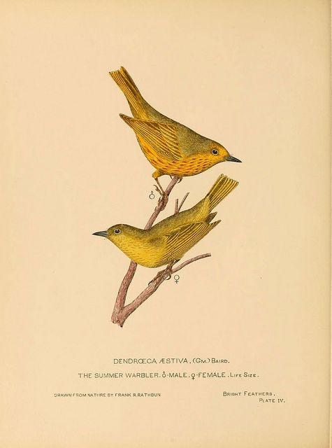 """""""Bright feathers, Auburn, N.Y. 1880 - 82."""" #Victorian #illustration #birds"""