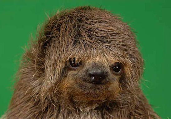 ? sloths!