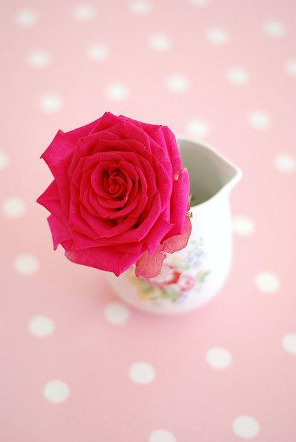 Sweet pink... rose