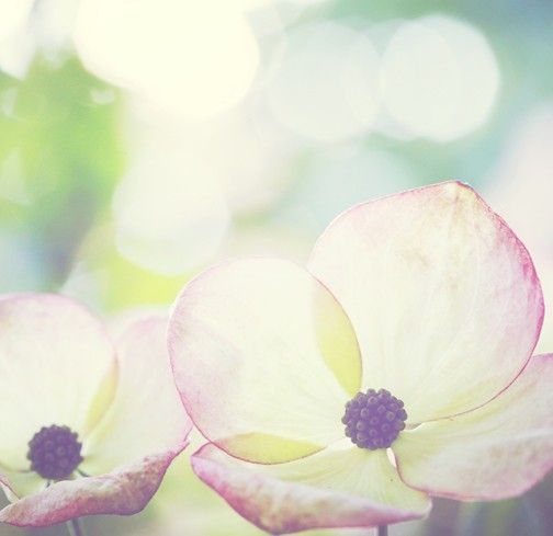 Dogwood by PineconeCamp on Etsy