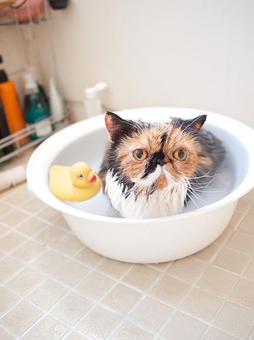 bath cat.