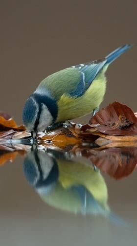 sweet reflections
