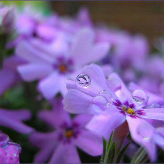 Beautiful flower ? (^_^)/