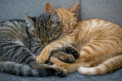 cute cat napping
