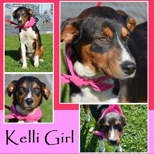 Kelli Girl is an adoptable Coonhound Dog in Jefferson, TX You can fill out an adoption application online on our official website.Hi there! My name is Ke ... ...Read more about me on @Petfinder.com.com.com.com.com.com.com.com