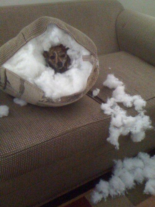 ..bad dog