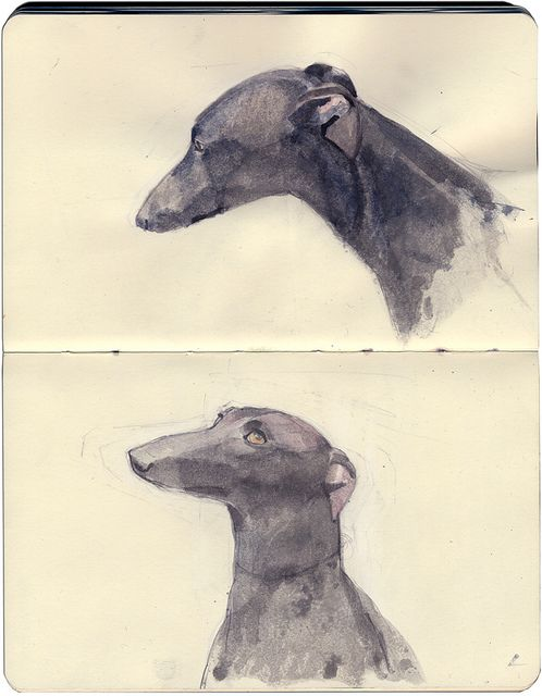 Whippet studies by Wil Freeborn, via Flickr