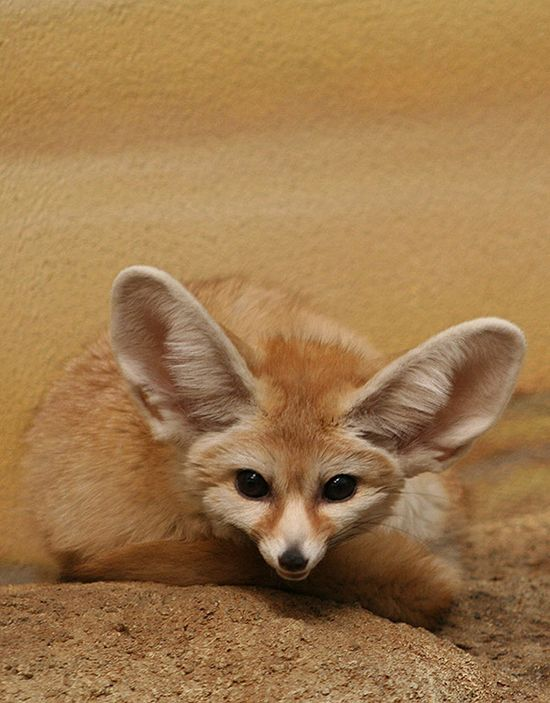 Adorable and Cute Baby Animals