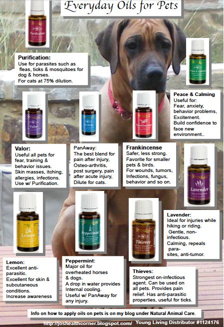 essential oils for pets. I recommend using Young Living Essential Oils.