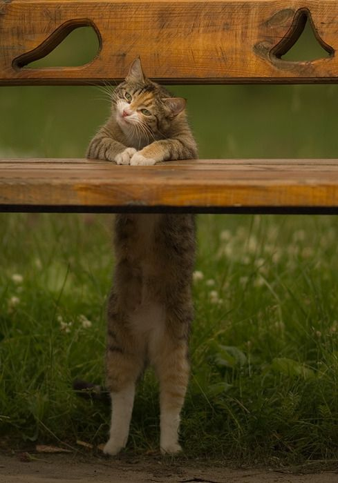 Oh hai, just popping in to wish you a lovely day :) #bench #cat #kitty #kitten #cute #pets #animals