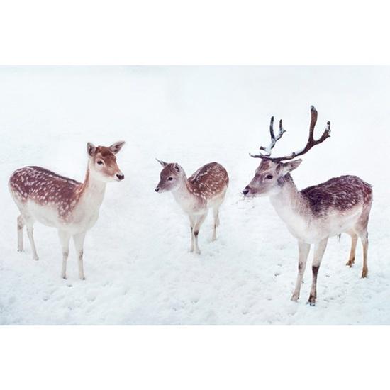 Bambi Family