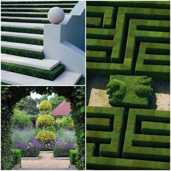 Beautiful #Boxwood #garden designs