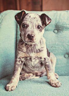 sweet little pup