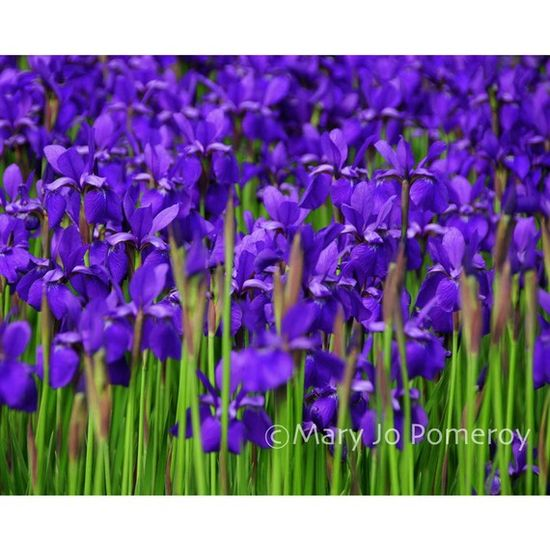 purple flowers  FourLeggedFarm  ETSY